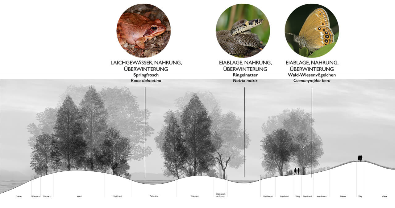 AAD-project-City-Park-Danube-Ingolstadt-Abb_11, Graphic by Studio Animal-Aided Design, Qingyu Liang