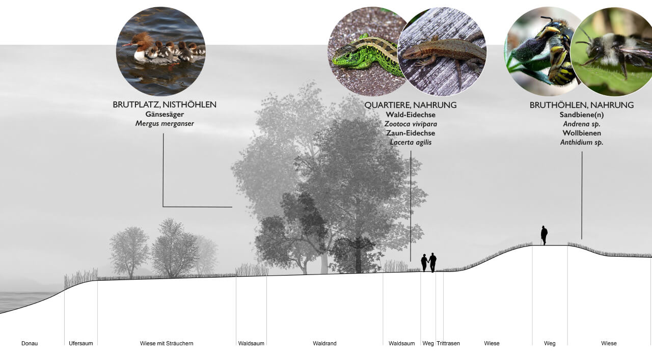 AAD-project-City-Park-Danube-Ingolstadt-Abb_9, Graphic by Studio Animal-Aided Design, Qingyu Liang