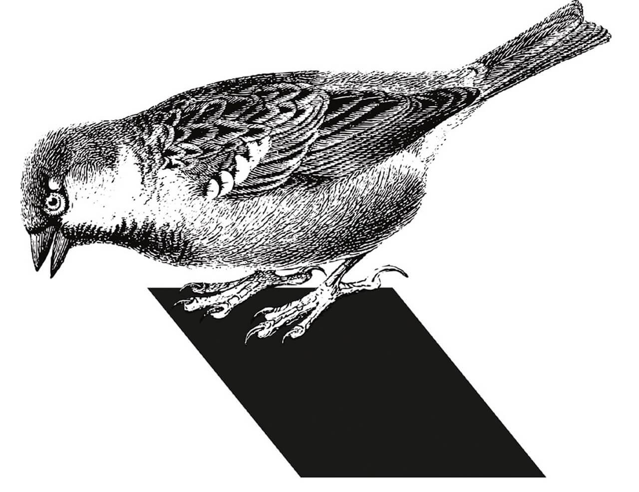 """AAD Projekt """"Biotopia"""" -Abb. 25 Grafik by Sophie Jahnke"""